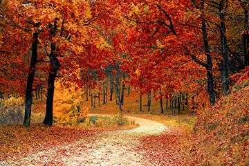 紅葉の中を走ろう
